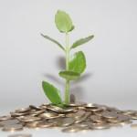 pénz_növény